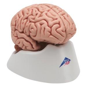 Plastic minds