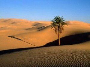 desert3-300x225